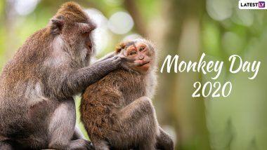 Monkey Day 2020: क्यों मनाया जाता है मंकी डे? जानें बंदरों को समर्पित इस दिवस का इतिहास और महत्व