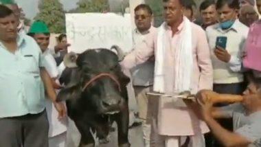 Farmers Protest: नोएडा में कृषि कानूनों के खिलाफ किसानों का आनोखा प्रदर्शन, भैंस के आगे बीन बजाकर जताया विरोध- देखें वीडियो