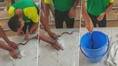 ITBP के जवानों ने घायल King Cobra की इस तरह बचाई जान, देखें वीडियो