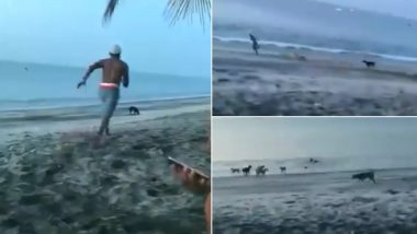 Stray Dog को नुकसान पहुंचाने के लिए उसके पास दौड़ा शख्स, फिर कुत्तों के झुंड ऐसे सिखाया सबक (Watch Viral Video)