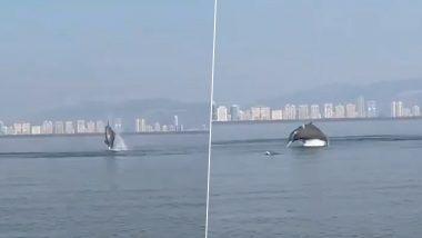Dolphins Viral Video: मुंबई के पास स्थित वाशी खाड़ी में तैरती दिखी डॉल्फिन, इस दुर्लभ नजारे का वीडियो हुआ वायरल
