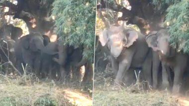 Elephants Viral Video: हाथियों के झुंड ने एकजुट होकर अपने क्षेत्र में दाखिल हुए लोगों को ऐसे भगाया, वीडियो हुआ वायरल