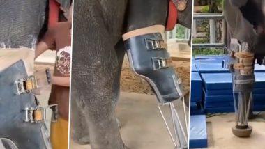 Viral Video: इंसानियत की अनोखी मिसाल! अपाहिज हाथी को शख्स ने लगाए नकली पैर, वीडियो हुआ वायरल