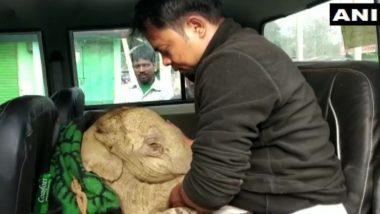 Elephant Calf Rescued in Assam: असम के एक गांव में मिट्टी के गड्ढे में गिरे हाथी के घायल बछड़े को किया गया रेस्क्यू, देखें तस्वीरें