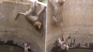 Viral Video: कुएं में गिरा नन्हा बंदर तो मां ने खुद को खतरे में डालकर बचाई उसकी जान, वायरल वीडियो देख आप भी कहेंगे- मां तूझे सलाम