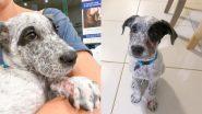 अपने पालतू Puppy को बचाने के लिए Carpet Python से भिड़ी महिला, देखें वायरल तस्वीरें