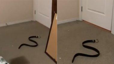 Prank With a Fake Snake: महिला ने नकली सांप के साथ अपने पति से किया प्रैंक, फिर जो हुआ… देखें वायरल वीडियो