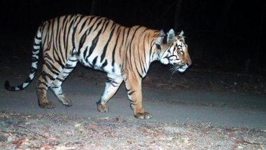 Maharashtra: महाराष्ट्र के चंद्रपुर में बाघ के हमले में दो लोगों की मौत