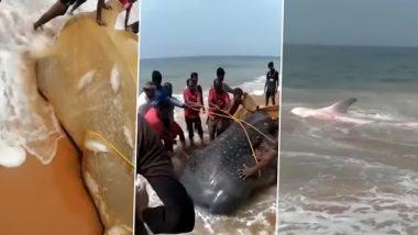 Kerala: मछुआरे ने जाल में फंसी विशालकाय व्हेल को समुद्र में वापस छोड़ा, इंटरनेट पर हो रही है वाह वाही