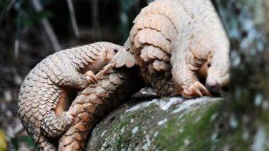 Wild Animals: अब खाने के लिए जंगली जानवरों की अवैध खरीदी करने पर मिल सकती है सजा, चीनी अधिकारियों ने दिशानिर्देश जारी किया