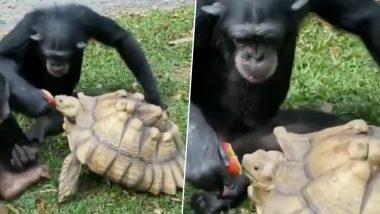 देखी है कभी गोरिल्ला और कछुए की ऐसी पक्की दोस्ती? इंसानों को जरुर सीखना चाहिए, देखें वायरल VIDEO