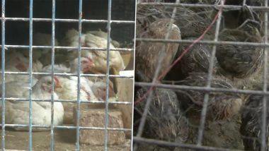 Bird Flu: बर्ड फ्लू के कहर के चलते यूपी के लखनऊ में चिकन की बिक्री में आयी 30 फीसदी की कमी, कीमत पर भी पड़ा असर