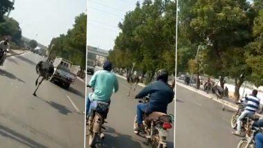 Ostrich Running on Karachi Road! जब प्राइवेट चिड़ियाघर से निकलकर कराची की सड़कों पर दौड़ने लगा शुतुरमुर्ग, वीडियो वायरल