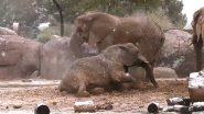 बर्फबारी को देख खुशी से झूमने लगा नन्हा हाथी, बर्फ के साथ खेल रहे इस प्यारे जानवर का वीडियो हुआ वायरल (Watch Viral Video)