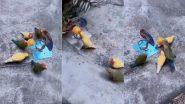 Viral Video: नन्हे पक्षियों ने मिलकर खेला बास्केटबॉल, इंटरनेट पर बार-बार देखा जा रहा है यह वायरल वीडियो