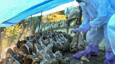 Bird Flu: देहरादून, ऋषिकेश में करीब 200 पक्षी मृत मिले