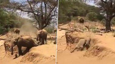 Elephant Viral Video: नीचे उतरने के लिए कूद नहीं सका हाथी तो निकाला ये नायाब तरीका, वीडियो देख हंसी से लोटपोट हो जाएंगे आप