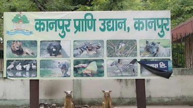 Bird Flu: बर्ड फ्लू की पुष्टि के बाद कानपुर चिड़ियाघर बंद, चार पक्षी पाए गए मृत