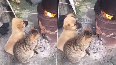 Puppy & Kitten Viral Video: कड़ाके की ठंड से बचने के लिए नन्हे डॉग और बिल्ली ने किया यह काम, वीडियो देख मुस्कुरा देंगे आप