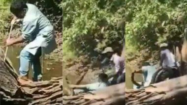 कर्नाटक: रेस्क्यू ऑपरेशन के दौरान जब King Cobra ने की शख्स को काटने की कोशिश, बाल-बाल बचा स्नैक कैचर (Watch Viral Video)