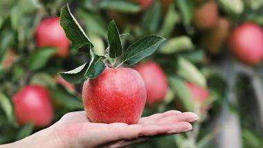Health Tips: फायदा ही नहीं नुकसान भी पहुंचा सकता है सेब, इसके सेवन से हो सकती हैं ये 5 समस्याएं