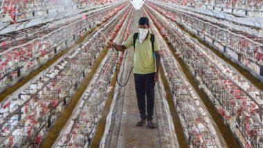 महाराष्ट्र के कई जिलों के पोल्ट्री फार्म में बर्ड फ्लू की पुष्टि; दिल्ली के चिड़ियाघर में भी पहुंचा Avian Influenza