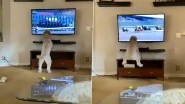 Viral Video: टीवी पर घोड़ों की रेस देखकर जोश में आया कुत्ता, किया कुछ ऐसा... मजेदार वीडियो हुआ वायरल