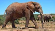 शर्मनाक! तमिलनाडु में रिजॉर्ट वर्कर ने हाथी पर जलता हुआ टायर फेंक कर ली उसकी जान, जानवर के साथ क्रूरता का यह वीडियो हुआ वायरल (Watch Viral Video)