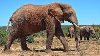 Elephant Attack: छत्तीसगढ़ में हाथियों का तांडव, 3 वर्षों में ली 204 लोगों की जान, 45 हाथी भी मरे