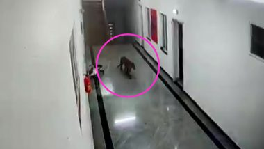 Leopard Enters in Medical College: कर्नाटक के चामराजनगर स्थित मेडिकल कॉलेज में घूमता दिखा खूंखार तेंदुआ, वीडियो वायरल