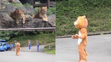 जापान: असली शेरों के सामने चिड़ियाघर में नकली शेर बनकर घूम रहा था शख्स, फिर जो हुआ… (Watch Video)