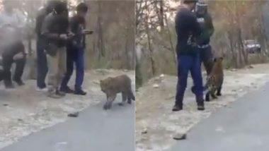 क्या ऐसे होते है इंसान: टलहते-टहलते लोगों की बीच जा पहुंचा तेंदुआ, डरने के बजाय भीड़ ने जानवर को खूब सताया (Watch Viral Video)