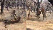 Tigers Fight Viral Video: जब दो बाघों के बीच हुई जबरदस्त लड़ाई, वायरल वीडियो में देखें क्या हुआ इसका अंजाम