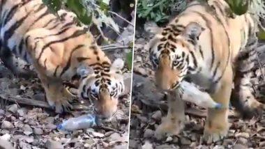 अद्भुत! जंगल में पड़े कचरे की बाघ ने ऐसे की सफाई, इंसानों को लेनी चाहिए इससे सीख (Watch Viral Video)