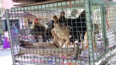 Bird Flu Scare in Karnataka: कर्नाटक में बर्ड फ्लू का डर, बेंगलुरु में चिकन के कारोबार में भारी गिरावट