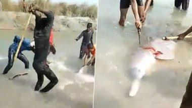 Shocking! यूपी के प्रतापगढ़ में स्थानीय लोगों ने डॉल्फिन को बेरहमी से डंडे से पीटकर मार डाला, देखें वीडियो