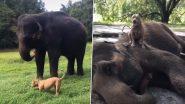 Viral Video: हाथी और कुत्ते की जबरदस्त दोस्ती देखकर हो जाएंगे हैरान, कभी नहीं छोड़ते एक दूसरे का साथ