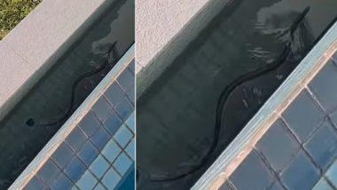 Snake Viral Video: घर के स्विमिंग पूल में तैरता हुआ मिला दुनिया का सबसे जहरीला सांप, वीडियो देख उड़ जाएंगे होश