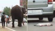 Viral Video: कुत्ते की लाश देखकर चेन में बंधे हाथी ने बदला अपना रास्ता, लेकिन इंसानों पर नहीं पड़ा कोई फर्क