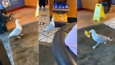 रेस्टॉरेंट में चोरी-छुपे दाखिल हुआ एक पक्षी, चिप्स का पैकेट चुराकर तेजी से हुआ फरार (Watch Viral Video)
