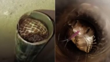 ओडिशा: पेट्रोल पंप पर स्टील के पाइप में फंसा किंग कोबरा, रेस्क्यू कर सांप को जंगल में छोड़ा गया (Watch Viral Video & Pics)