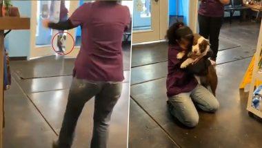 VIDEO: अपने बिछड़े मालिक को देखते ही दौड़ पड़ा कुत्ता, खुशी से रोती महिला ने कुछ यूं लगा लिया गले