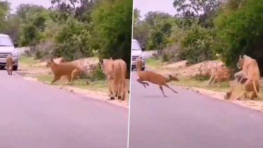 Viral Video: हिरण की तेज रफ्तार चाल से दूम दबाकर भागे शेर, देखें हैरान कर देनेवाला वीडियो