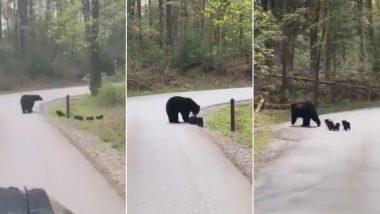 Viral Video: अपने नन्हे बच्चों को सड़क पार कराती मां भालू का वीडियो हुआ वायरल, यूजर्स बोले- इससे सीख लेने की जरूरत