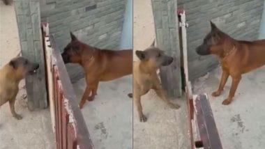 बंद गेट के दोनों तरफ खड़े कुत्ते एक-दूसरे को देख जोर-जोर से लगे भौंकने, जब खुला दरवाजा तो… (Watch Viral Video)