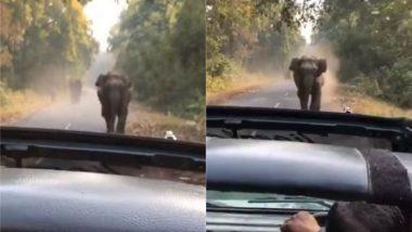 जीप की तरफ तेजी से बढ़ रहा था हाथी, घबराने के बजाय पर्यटकों में से एक ने कहा- कुछ नहीं होगा, तुम वीडियो बनाओ (Watch Viral Video)