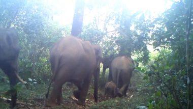 Elephant Dance Viral Video: जंगल में चलते-चलते जब एक हाथी करने लगा डांस, मन मोह लेगा हाथियों के परिवार का यह वीडियो