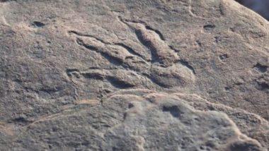 Viral Pic: 4 साल की बच्ची ने की डायनासोर के पैरों के निशान की खोज, 220 मिलियन साल पुराना है इसका इतिहास