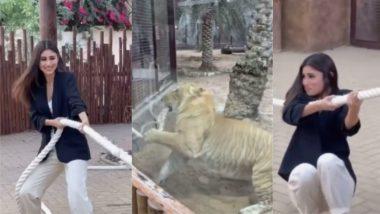 बाघ के साथ रस्साकशी खेलती नजर आईं नागिन एक्ट्रेस Mouni Roy, हैरान कर देने वाले Video में एक्ट्रेस का हुआ ऐसा हाल!