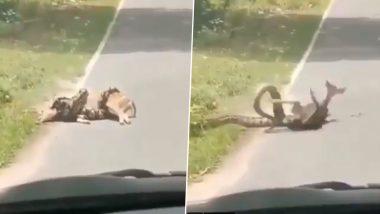 अजगर के चंगुल में फंसे हिरण को बचाने पहुंचा शख्स, यह देख सांप को आया गुस्सा फिर उसने किया कुछ ऐसा... (Watch Viral Video)